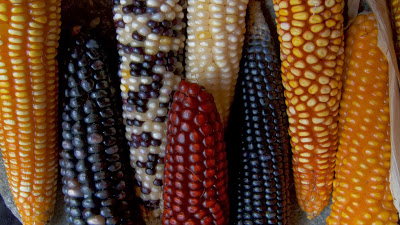 1438_Mayan_Corn