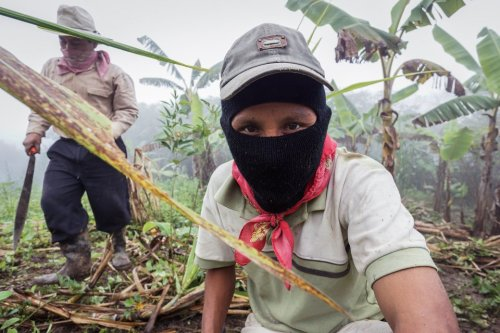 the-zapatista-communities-rely-heavily-on-bananas-a-plantation-for-which-is-seen-below-as-well-as-coffee-beans-and-amber-which-they-trade-through-self-governed-co-operatives-overseen-by-a-junta-that-distributes-the-resul