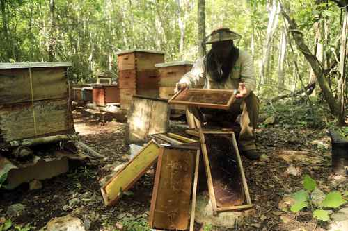 Beekeeper on Yucatán Peninsula Photo: Robin Canul