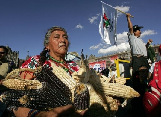 A Mexican women carries cobs of different corn varieties during a protest in Mexico City. I Photo: AFP
