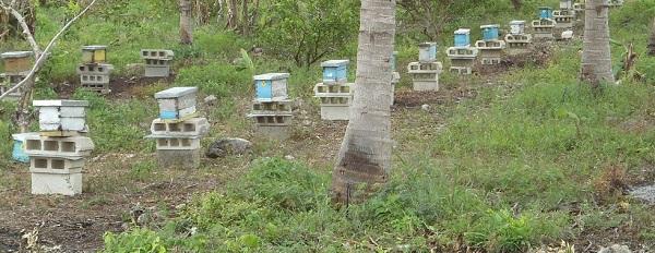 Peasant Farmers, Beekeepers File Injunction Against Planting GM Soybean in Quintana Roo